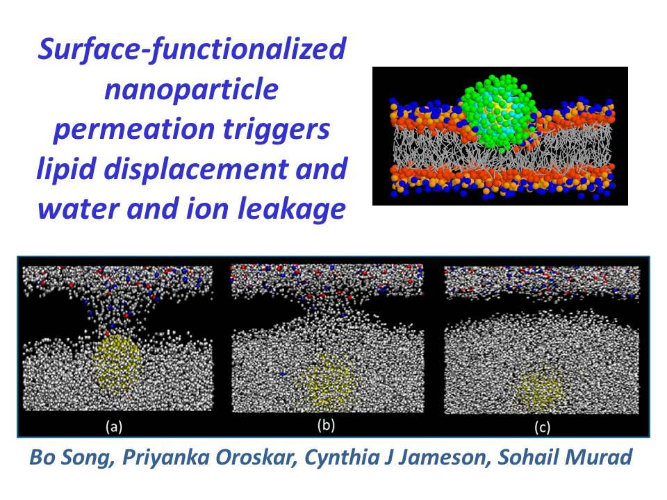 Surface-functionalized NPs trigger ...